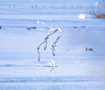 oiseaux migrateurs camping camargue
